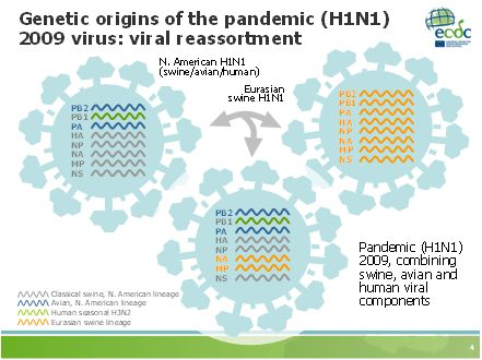 Pandemic H1N1 2009 Flu Virus